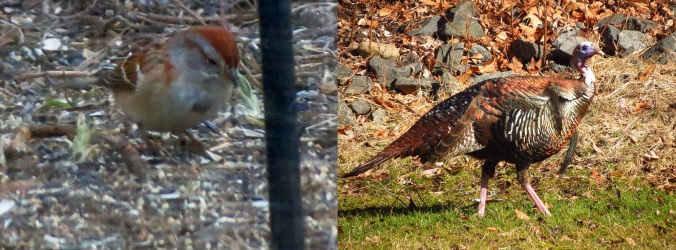 feeder-birds